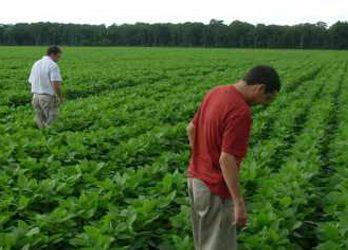 Crearon el primer semillero orgánico del país en Santiago del Estero