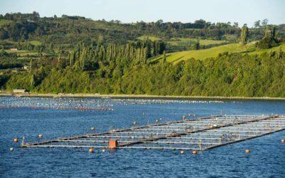 Chile acude a la justicia ambiental por el escape de 690 mil salmones
