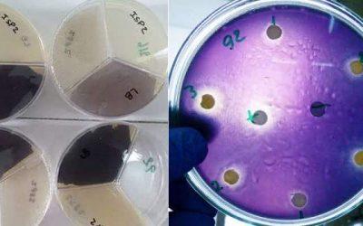 Bacterias marinas se podrían aprovechar como bioplaguicidas