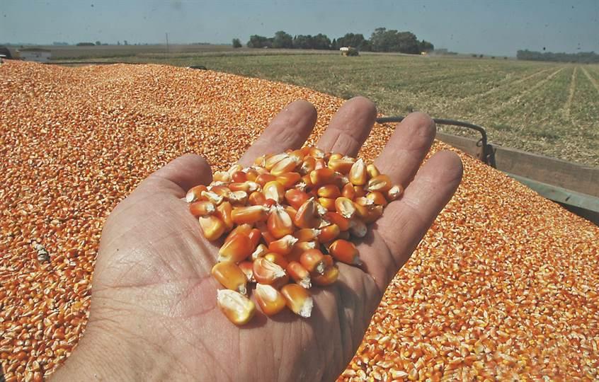 Recalculando: el maíz cae en 200 mil hectáreas; la soja sube y va por 17,9 millones de hectáreas