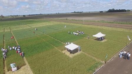 Se viene una nueva Expo Nexo LARES, edición fungicidas en cereales de invierno