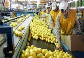 El limón argentino cierra con éxito la campaña 2018: envió casi 11 mil toneladas, a Estados Unidos