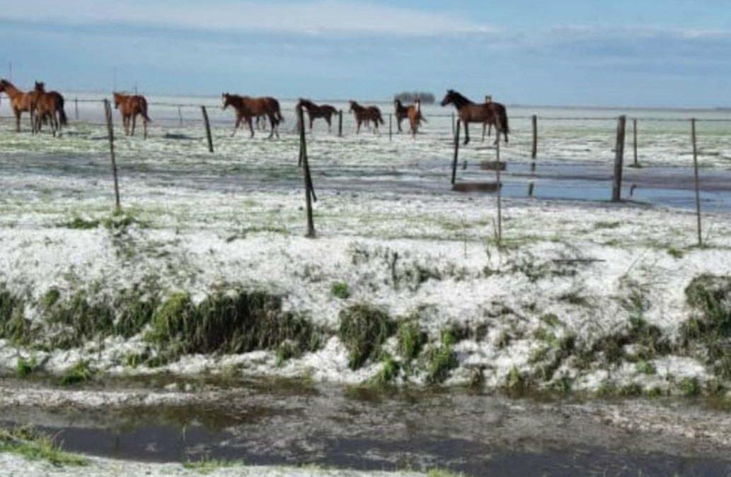 Santa Fe: el granizo destruyó cultivos en campos del departamento San Jerónimo